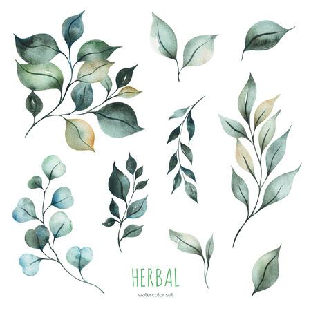 Collection d'herbes à l'aquarelle.Texture avec des feuilles et des branches vertes.Parfait pour les mariages, les invitations, les cartes de voeux, les citations, les motifs, les bouquets, les logos, les cartes d'anniversaire, etc.