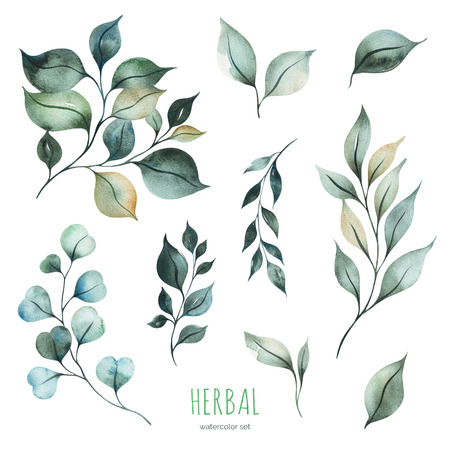 Watercolor Herbal collection.Texture with green leaves and branches.Perfect for wedding, invitations, greeting cards, quotes, pattern, bouquet, logos, Birthday cards and more 免版税图像