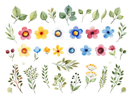 Colorful floral collection with multicolored flowers, leaves, branches, berries and more. Set with 40 watercolor elements.Perfect for wedding, invitations, greeting, quotes, patterns, bouquets, logos, birthday.