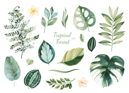 Watercolor Tropical Forest set.Texture with green leaves, branches, palm leaf, flowers.Perfect for wedding, invitations, greeting cards, quotes, patterns, bouquets, logos, Birthday cards, your unique creation.