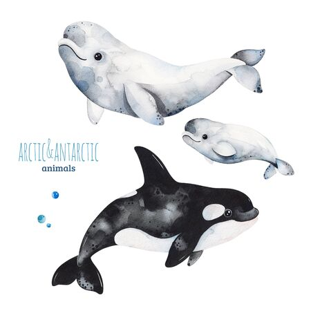 Watercolor set with cute beluga and orca whale.Cartoon arctic and antarctic animals.Perfect for your project, print, scrapbook, baby shower, Birthday card, invitations, greeting card and much more.