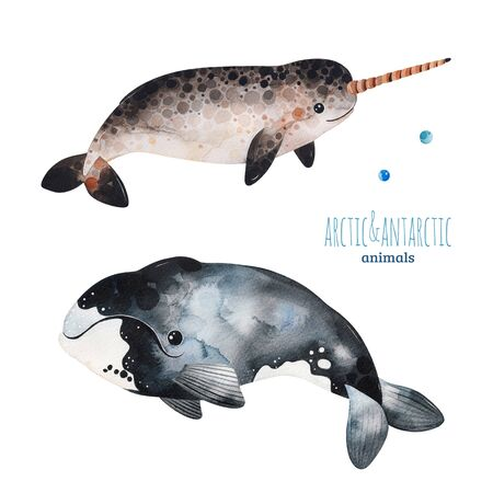 Watercolor set with cute whale and narwhal.Cartoon arctic and antarctic animals.Perfect for your project, print, scrapbook, baby shower, Birthday card, invitations, greeting card and much more.