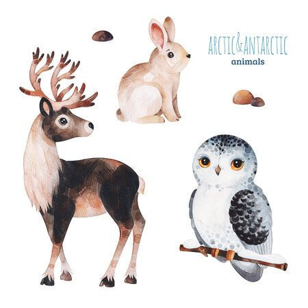 Watercolor set with cute reindeer, snowy owl and rabbit .Cartoon arctic and antarctic animals.Perfect for your project, print, scrapbook, baby shower, Birthday card, invitations, greeting card and much more.
