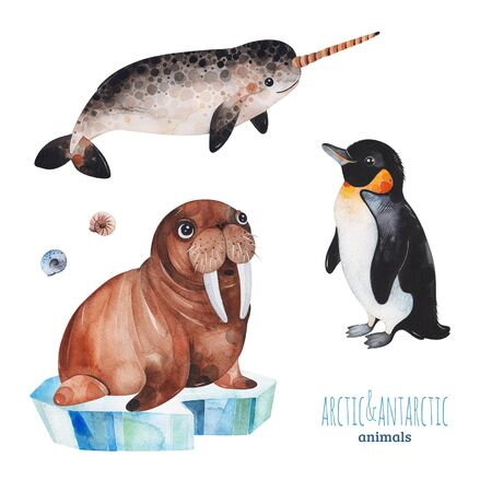 Watercolor set with cute penguin, narwhal and walrus .Cartoon arctic and antarctic animals.Perfect for your project, print, scrapbook, baby shower, Birthday card, invitations, greeting card and much more Stockfoto