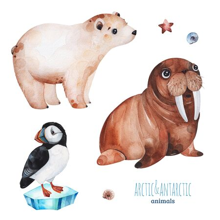 Watercolor set with cute polar bear, puffin and walrus .Cartoon arctic and antarctic animals.Perfect for your project, print, scrapbook, baby shower, Birthday card, invitations, greeting card and much more.
