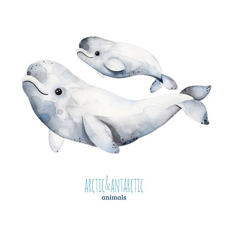 Watercolor set with cute mother and baby beluga whales .Cartoon arctic and antarctic animals.Perfect for your project, print, scrapbook, baby shower, Birthday card, invitations, greeting card and much more. Zdjęcie Seryjne