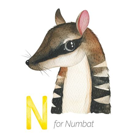 Watercolor Animals Alphabet.Learn letters with funny animals. Cute Numbat for N letter. Perfect for education, baby shower, children prints or room decor, template cards, books and much more