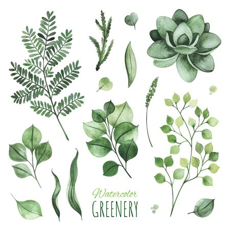 Watercolor Greenery set.Texture with leaves, fern, branches, succulent.Perfect for wedding, invitations, greeting cards, quotes, patterns, logos and your unique creation.