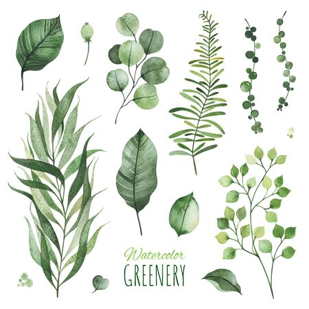 Watercolor Greenery set.Texture with palm leaf, fern, branches.Perfect for wedding, invitations, greeting cards, quotes, patterns, logos and your unique creation.