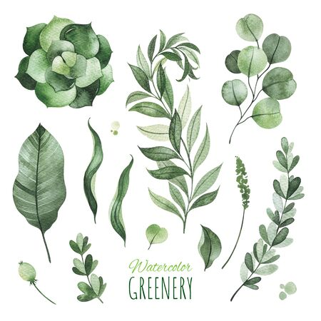 Watercolor Greenery.Texture with greens, succulent, leaves, branches.Perfect for wedding, invitations, greeting cards, quotes, patterns, bouquets, logos, Birthday cards, your unique creation.