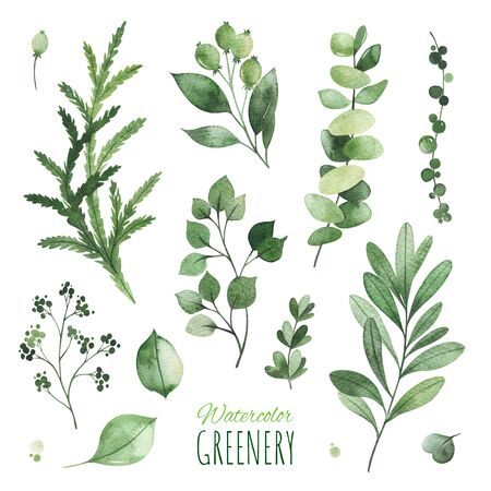 Watercolor Greenery set.Texture with eucalyptus, leaves, fern, branches, berries.Perfect for wedding, invitations, greeting cards, quotes, patterns, logos and your unique creation.