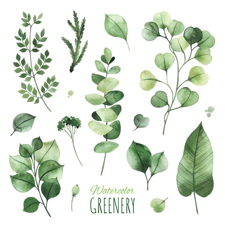 Watercolor Greenery set.Texture with eucalyptus, leaves, fern, branches.Perfect for wedding, invitations, greeting cards, quotes, patterns, logos and your unique creation. Standard-Bild