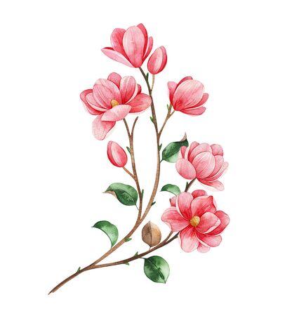 Beautiful watercolor magnolia blossom branches on white