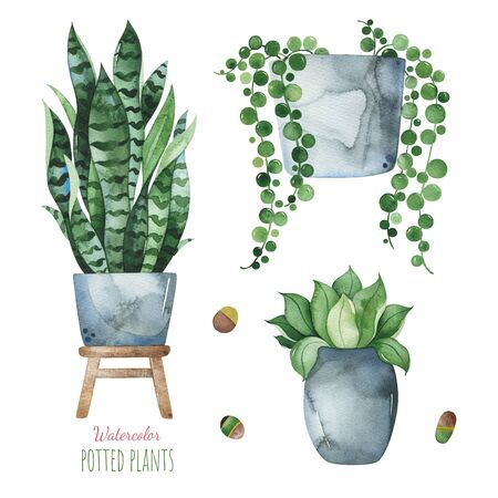 Watercolor potted plants set.Fresh elements isolated on white background.Perfect for your project, print, wallpaper, patterns, gift paper, wedding, greeting, invitations Stockfoto