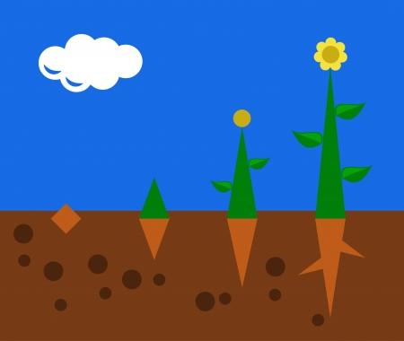 crecimiento planta: crecimiento de las plantas desde la semilla hasta la flor