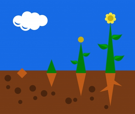 plant seed: plant growth from seed to the flower Illustration