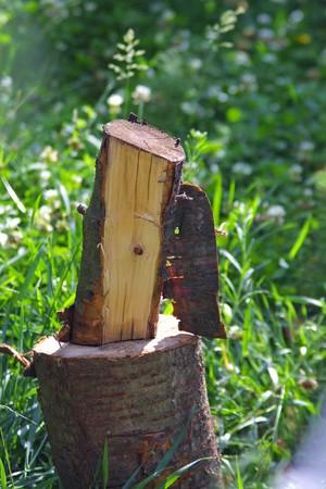 billet: Piece of billet in the garden Stock Photo