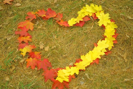 Heart symbol made from yellow and red maple leaves on the ground photo