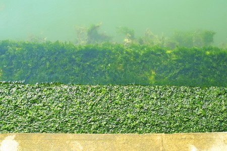 Close-up stairs descending into algae in Venetian Grand Channel photo