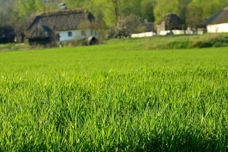 Meadow with green grass and old buildings photo
