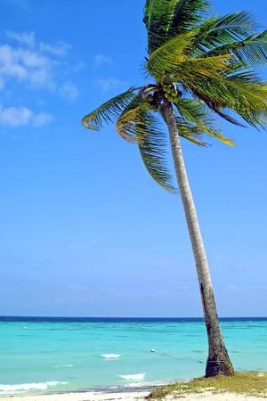 Coconut palm on the beach, Lipe Island, Thailand Фото со стока