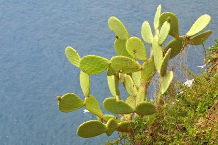 paisaje mediterraneo: Paisaje mediterr�neo con cactus y el fondo de mar  Foto de archivo