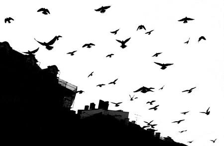 크라코프에서 비둘기입니다. 검정, 흰색
