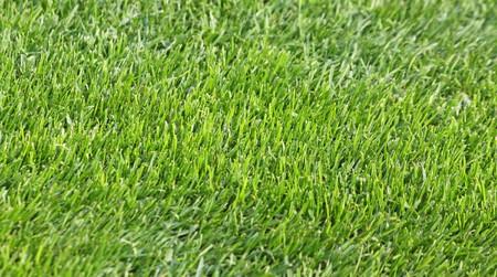 Close-up green grass soccer field photo