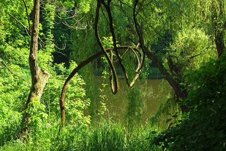 dreamland: Summer forest with green trees, grass and small lake