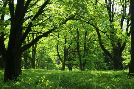 Summer forest with green grass and trees Stock Photo - 8380013