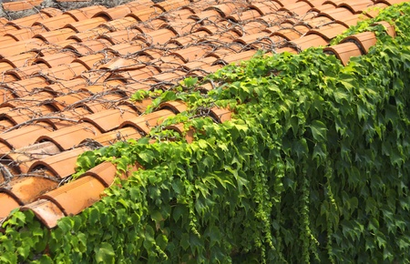 A red tile roof with branches of plodding ivy Stock Photo - 8467265