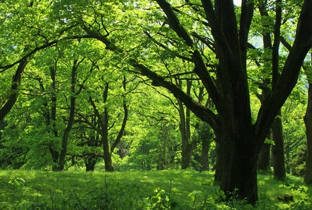 Summer forest with green grass and trees photo