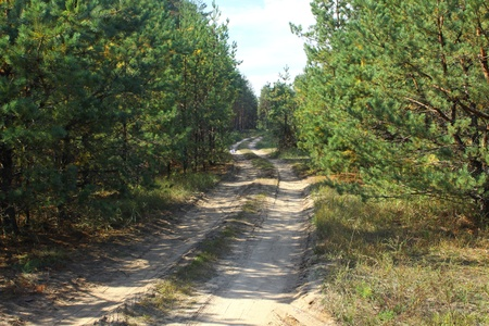Summer pinewood with road Stock Photo - 9216216