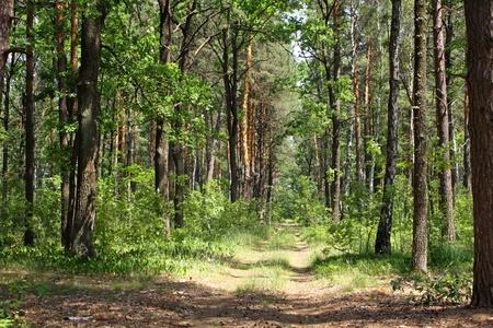 foresta: Estate boschi miscelati con passerella, erba verde e alberi