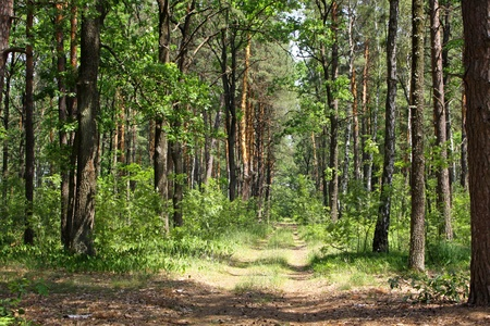 Summer mixed forest with walkway, green grass and trees
