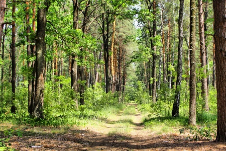 hdr background: Summer mixed forest with walkway, green grass and trees (HDR) Stock Photo