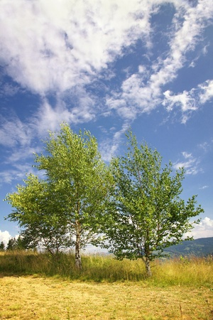 Landscape with birches in Carpathian mountains, Ukraine Stock Photo - 10800913