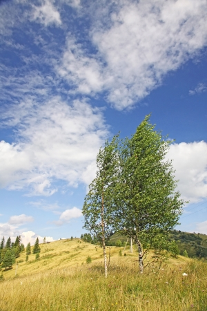 Landscape with birches in Carpathian mountains, Ukraine Stock Photo - 15779135