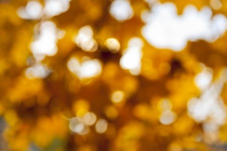 Abstract bokeh background made of autumn leaves photo