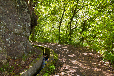 Hiking along irrigation canals (historic water supply system, known as Levada) in magical forest, Madeira Island, Portugal