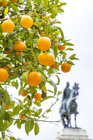 Orange tree with Monument to the Fernando III El Santo (Ferdinand III the Saint, King of Castile) on the background. Plaza Nueva in Seville city, Andalusia, Spain