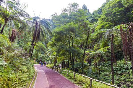 Natural Park Caldeira Velha near Ribeira Grande town, Sao Miguel island, Azores, Portugal