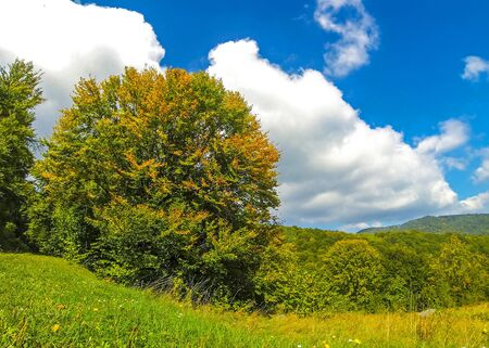 Golden autumn colours of the trees in Carpathian mountains, Ukraine. Фото со стока