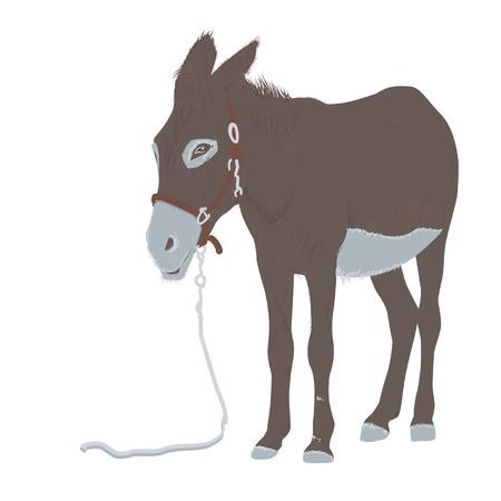 ass donkey: donkey