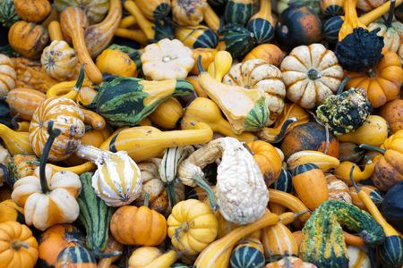 A big bunch of pumkins and gourds at the market for sale Stock Photo - 5683833