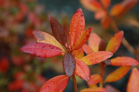 Colorful Autumn Leaves photo
