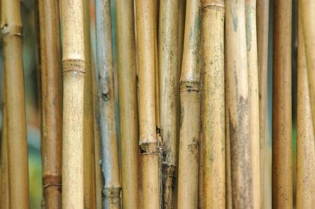 Closeup of bamboo Stok Fotoğraf