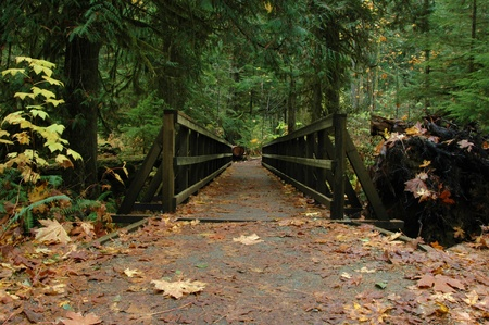 A wooden bridge leading to a lush forest Stok Fotoğraf