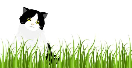 Adorable back and white tuxedo cat sitting on green grass in garden. Isolated on white background. Vector Illustration.