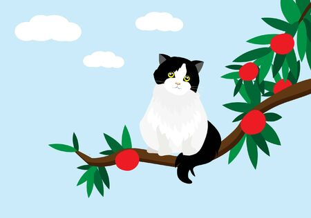 Adorable back and white persian tuxedo cat sitting on branch of red fruits tree. Isloated on whilte clouds and blue sky background. Vector Illustration.Idea for animal's cute template and background. Foto de archivo - 150173239